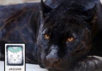Mayan Jaguar Time