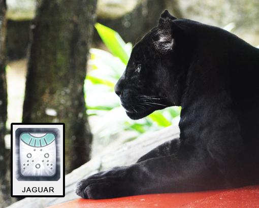 Mayan Jaguar Time: The Search Begins