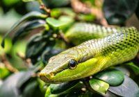 Mayan Sign Serpent