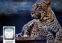 Mayan Jaguar Time Series