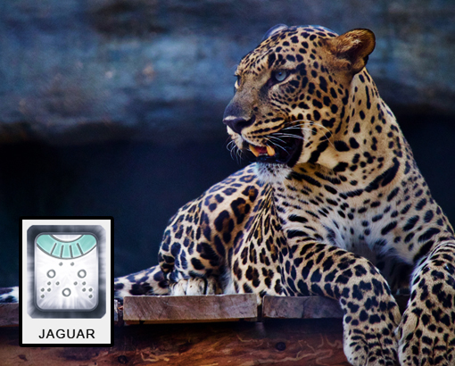 Mayan Jaguar Time: The First Step
