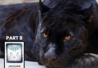 The Jaguar-Mayan Jaguar Time