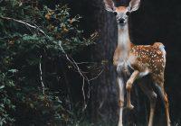 Mayan Sign Deer in Nature