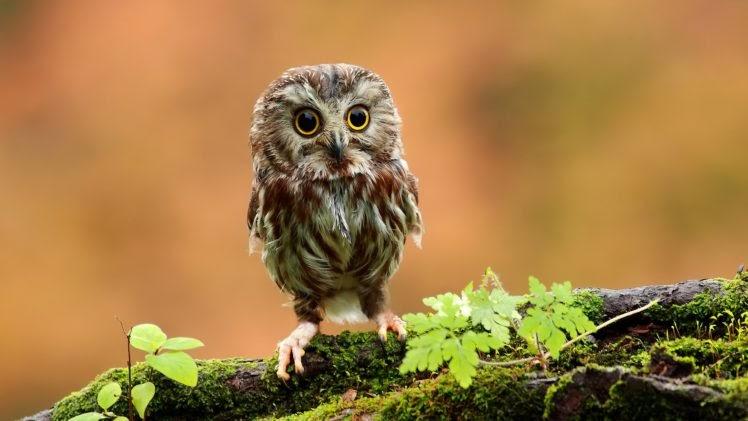Mayan Sign Seed - Baby Owl